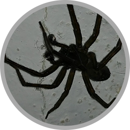 Spider-Removal